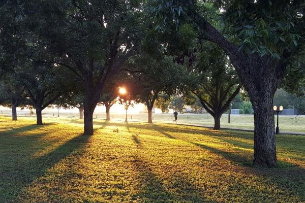 Parklar ve piknik alanları